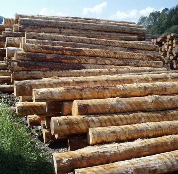 Самым популярным в РФ считается планкен из лиственницы - так как это дерево имеет много достоинств - otdelat.ru